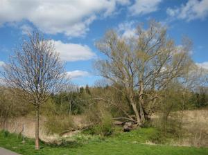 träd och trägen