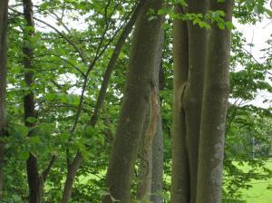 teckenträd