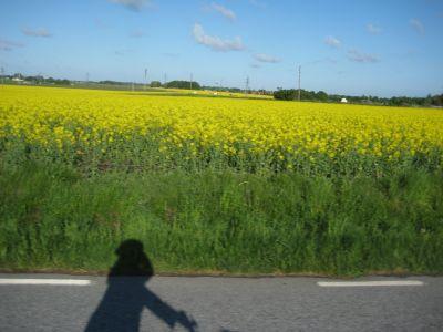 cykla till Lund på den  fantastiskt vackra gamla landsvägen till Trelleborg
